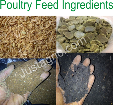 Disadvantages Of Using These 12 Feed Ingredients In Poultry Feed