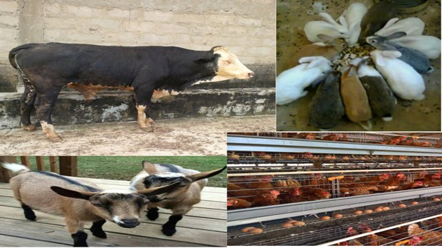 3 Best Feed Formulation Software: For Poultry, Cattle, Sheep And Goat