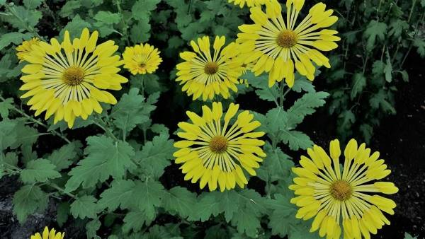 8 Medicinal Plants Which Purify Air