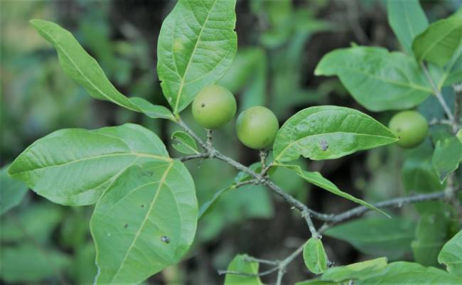 Five (5) Medicinal Plants Used For Water Purification