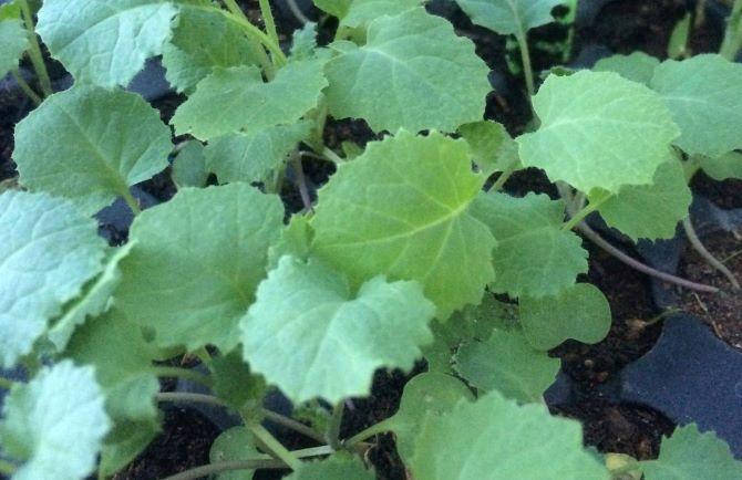 10 Best Kale Varieties To Grow