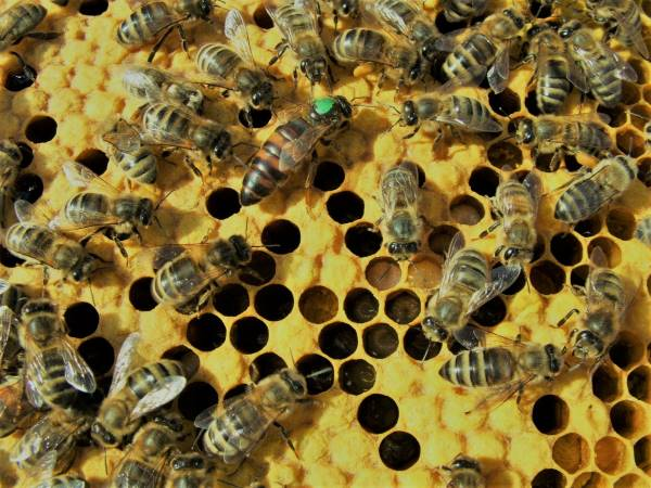 Standard Requirements For Keeping Bees In Residential Areas