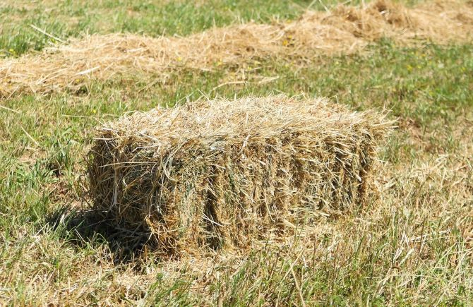 Guide On Selecting The Best Hay For Dairy Cows