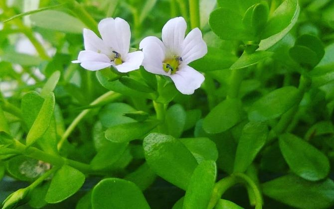 Best Eight (8) Herbs For Mental Clarity And Focus