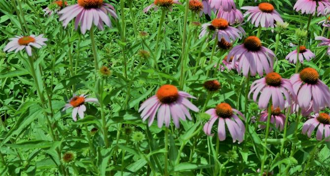 Eight (8) Natural Herbs Used For Boils Treatment